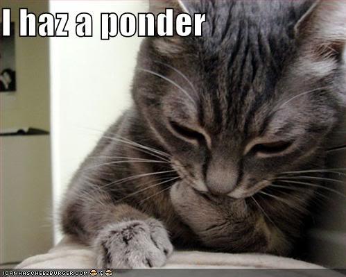 Pondering Cat Free Stock Photo - Public Domain Pictures