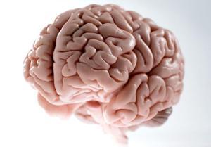 alg-model-brain-jpg